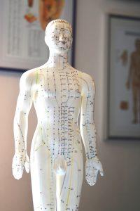 Körper-Modell mit Leitbahnen und Akupunktur-Punkten